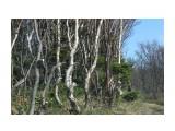 Сказочный лес... Фотограф: vikirin  Просмотров: 1625 Комментариев: 0