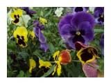 2010-07-07 04-31-03_0153 Фотограф: NIK  Просмотров: 275 Комментариев: 0