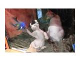 Название: Малыш Фотоальбом: выставка кошек Категория: Животные  Время съемки/редактирования: 2015:10:17 18:51:52 Фотокамера: Canon - Canon EOS 550D Диафрагма: f/5.6 Выдержка: 1/100 Фокусное расстояние: 135/1    Просмотров: 398 Комментариев: 0
