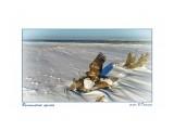 Белоплечий орлан Фотограф: В.Дейкин  Просмотров: 448 Комментариев: 1