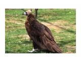 Название: IMG_7772 Фотоальбом: сафари-парк львов(крым) Категория: Животные  Просмотров: 1224 Комментариев: 0