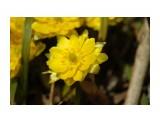 DSC05617 Фотограф: NIK  Просмотров: 435 Комментариев: 0