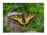 Бабочка Фотограф: Лика73  Просмотров: 3459 Комментариев: 0