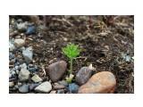 Первые весенние крошечные росточки... Фотограф: vikirin  Просмотров: 1912 Комментариев: 0