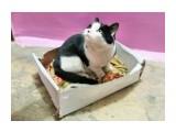 потеряшка ХОЗЯИН ОТЗОВИСЬ. В подъезде, в Луговом уже третий день бегает кот. Кот чистый, домашний. Кто знает помогите найти хозяина кота.  Просмотров: 407 Комментариев: