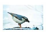DSC02662_новый размер Фотограф: В.Дейкин  Просмотров: 1535 Комментариев: 1