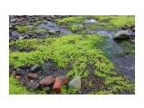 Неоновые водоросли Фотограф: vikirin  Просмотров: 2066 Комментариев: 0
