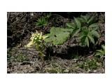 Цветы лопуха... Фотограф: vikirin  Просмотров: 2065 Комментариев: 0