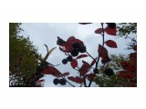 Название: P1000413 Фотоальбом: Поездка в Лесогорское. Категория: Природа  Просмотров: 307 Комментариев: 0