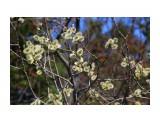 Весной... Фотограф: vikirin  Просмотров: 1559 Комментариев: 0