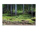 Название: Лес безжизненный, мертвый, ни зверинки, все затянуто наглухо зеленым мхом.. Фотоальбом: 2010-2009 09 26 сб / 2008 10 3-4  Тэнге Категория: Природа Фотограф: vikirin  Время съемки/редактирования: 2010:10:10 12:09:14 Фотокамера: Canon - Canon EOS Kiss X3 Диафрагма: f/5.6 Выдержка: 1/60 Фокусное расстояние: 55/1 Светочуствительность: 1250   Просмотров: 3375 Комментариев: 0