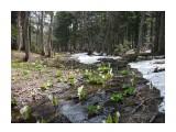 Два времени года, зима и весна, на одном фото! Фотограф: viktorb Пейзаж весеннего леса в Уюновской долине. Окр. Южно-Сахалинска!  Просмотров: 1210 Комментариев: 0