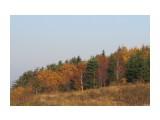 Осенний лес  Просмотров: 1187 Комментариев: