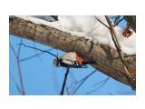 Название: DSC02881 Фотоальбом: Птички Категория: Животные Фотограф: VictorV  Время съемки/редактирования: 2020:01:12 21:55:24 Фотокамера: SONY - SLT-A99 Диафрагма: f/5.0 Выдержка: 1/2500 Фокусное расстояние: 4000/10    Просмотров: 80 Комментариев: 0