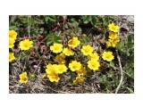 Желтые крохотки на горе.. Фотограф: vikirin  Просмотров: 2233 Комментариев: 0