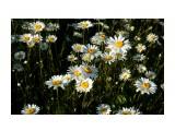 DSC09389 Фотограф: vikirin  Просмотров: 301 Комментариев: 0