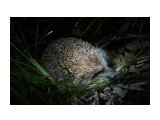 Ночью в лесу Фотограф: В.Дейкин  Просмотров: 900 Комментариев: 0