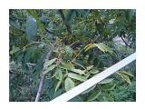 Название: Тож была гроздь, нов последний тайфун оббились об перила Фотоальбом: Орехи на балконе Категория: Природа Фотограф: Alezzander  Время съемки/редактирования: 2013:08:27 08:38:39 Фотокамера: SONY - DSC-H10 Диафрагма: f/4.0 Выдержка: 10/1000 Фокусное расстояние: 108/10    Просмотров: 999 Комментариев: 0