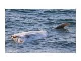 Название: Возле Невельска (Селезнево) к берегу прибило волной какое-то неизвестное  морское животное.... Фотоальбом: Обитатели морских глубин Категория: Море Фотограф: 7388PetVladVik  Время съемки/редактирования: 2019:03:08 18:22:39 Фотокамера: Canon - Canon EOS 750D Диафрагма: f/7.1 Выдержка: 1/400 Фокусное расстояние: 225/1    Просмотров: 1544 Комментариев: 0