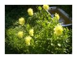 Цветы на даче Фотограф: Лика  Просмотров: 3022 Комментариев: 0