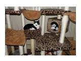 Сестренки. Бася в домике, Мася в лежанке. Фотограф: tasya  Просмотров: 491 Комментариев: 0
