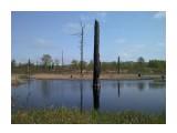 Лешево болото Фотограф: gadzila Там чудеса, там леший бродит ...  Просмотров: 3408 Комментариев: 2