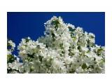 DSC09198 Фотограф: vikirin  Просмотров: 255 Комментариев: 0