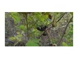 Название: P1000415 Фотоальбом: Поездка в Лесогорское. Категория: Природа  Просмотров: 389 Комментариев: 0