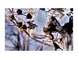 Название: DSC02169 Фотоальбом: ПТИЧЧЧИКИ Категория: Животные Фотограф: vikirin  Время съемки/редактирования: 2019:01:20 20:50:08 Фотокамера: SONY - NEX-5T Диафрагма: f/6.3 Выдержка: 1/400 Фокусное расстояние: 2100/10    Просмотров: 192 Комментариев: 0