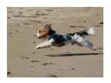 Название: Оскар Фотоальбом: собаки Категория: Животные  Время съемки/редактирования: 2017:09:17 17:41:10 Фотокамера: Canon - Canon EOS 1200D Диафрагма: f/5.6 Выдержка: 1/1600 Фокусное расстояние: 135/1    Просмотров: 334 Комментариев: 2