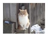 ЖИВОТНЫЕ  соседский кот   Просмотров: 111  Комментариев: 1
