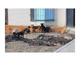 Бездомные собачки ... Фотограф: 7388PetVladVik  Просмотров: 1650 Комментариев: 0