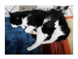 Чудо-юдо невиданна зверушка!!! Нееет... :))) это Бася и Мася.  Просмотров: 234 Комментариев: 0