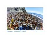 Деликатесы полуострова Шмидта Фотограф: В.Дейкин  Просмотров: 366 Комментариев: 0