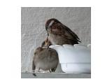 Название: семья Фотоальбом: мой птичник на балконе Категория: Животные  Время съемки/редактирования: 2011:07:04 10:25:01 Фотокамера: OLYMPUS IMAGING CORP.   - SP570UZ                 Диафрагма: f/5.6 Выдержка: 10/4000 Фокусное расстояние: 3501/100 Светочуствительность: 640  Описание: Птенец сам ещё не может есть  Просмотров: 716 Комментариев: 2