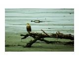 DSC07304 Фотограф: В.Дейкин  Просмотров: 1489 Комментариев: 0