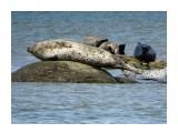 Название: DSC05371_н Фотоальбом: Животные Категория: Животные  Время съемки/редактирования: 2021:08:12 21:38:34 Фотокамера: SONY - DSC-HX300 Диафрагма: f/6.3 Выдержка: 1/250 Фокусное расстояние: 21500/100    Просмотров: 190 Комментариев: 0