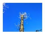 Деревья Фотограф: alexei1903  Просмотров: 1142 Комментариев: 0