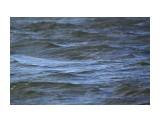 Вода в проливчике неспокойная.. Фотограф: vikirin  Просмотров: 2463 Комментариев: 0