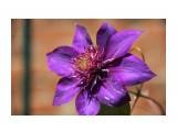 Название: IMG_4365 Фотоальбом: Цветы Категория: Цветы  Просмотров: 127 Комментариев: 0