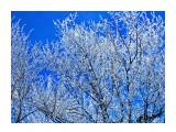 Деревья Фотограф: alexei1903  Просмотров: 1120 Комментариев: 0