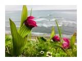 Венерин башмачок -цветок из детства моей мамы  0459ED96-1DEC-43B3-B156-D769DEA94E13   Просмотров: 174  Комментариев: 0