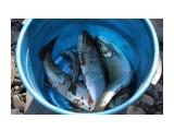 Начало есть. На ушицу свежей рыбки поймали... Фотограф: vikirin  Просмотров: 1450 Комментариев: 0