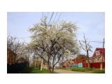 IMG_0287 Фотограф: gadzila Весна Кубани  Просмотров: 493 Комментариев: 0
