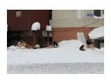 Осторожно, бездомные собаки!  Фотограф: 7388PetVladVik  Просмотров: 3448 Комментариев: 0