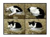 Маська утрамбовывается спать Вот нравятся кошкам всякие мелкие объемы. Так и норовят в них разместиться, хотя это получается с трудом!  Просмотров: 388 Комментариев: 1