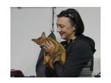 Название: Выставка Фотоальбом: выставка кошек Категория: Животные  Время съемки/редактирования: 2015:10:18 09:06:54 Фотокамера: Canon - Canon EOS 550D Диафрагма: f/5.0 Выдержка: 1/200 Фокусное расстояние: 47/1    Просмотров: 305 Комментариев: 0
