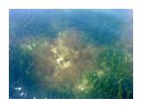 Название: Сады подводные Фотоальбом: 2010 07 10-11 сб,/ 2009 07 24 Мыс Мосия,мыс Тоннель, мыс Круглый Категория: Туризм, путешествия Фотограф: vikirin  Время съемки/редактирования: 2010:07:11 12:28:11 Фотокамера: Sony Ericsson - T700 Диафрагма: f/2.8 Выдержка: 1/125 Фокусное расстояние: 360/100 Светочуствительность: 64   Просмотров: 3152 Комментариев: 0