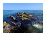 Тюлени в ожидании рыбы Фотограф: В.Дейкин ЛАРГА (пятнистый, или обыкновенный, тюлень; Phoca vitulina), морское млекопитающее семейства настоящих тюленей. Длина до 2 м, весит около 65 кг. Распространен у восточных берегов Северной Америки, побережья Северной Европы, Азии, северной части Тихого океана от Чукотского моря к югу до Кореи и Калифорнии.  Просмотров: 1033 Комментариев: 3