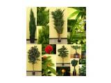 Наши искусственные растения.Заказ Фотограф: нат  Просмотров: 494 Комментариев: 0